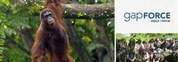 Borneo Orangutan Protection