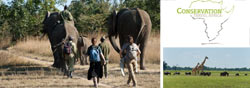 Teaching and Big 5 Wildlife Conservation